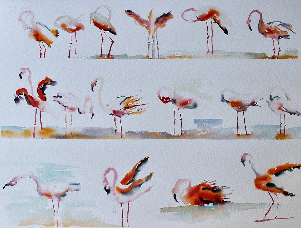Les Flaments Roses<br /> Watercolour on Arches 640gsm<br /> 57 cm x 76 cm